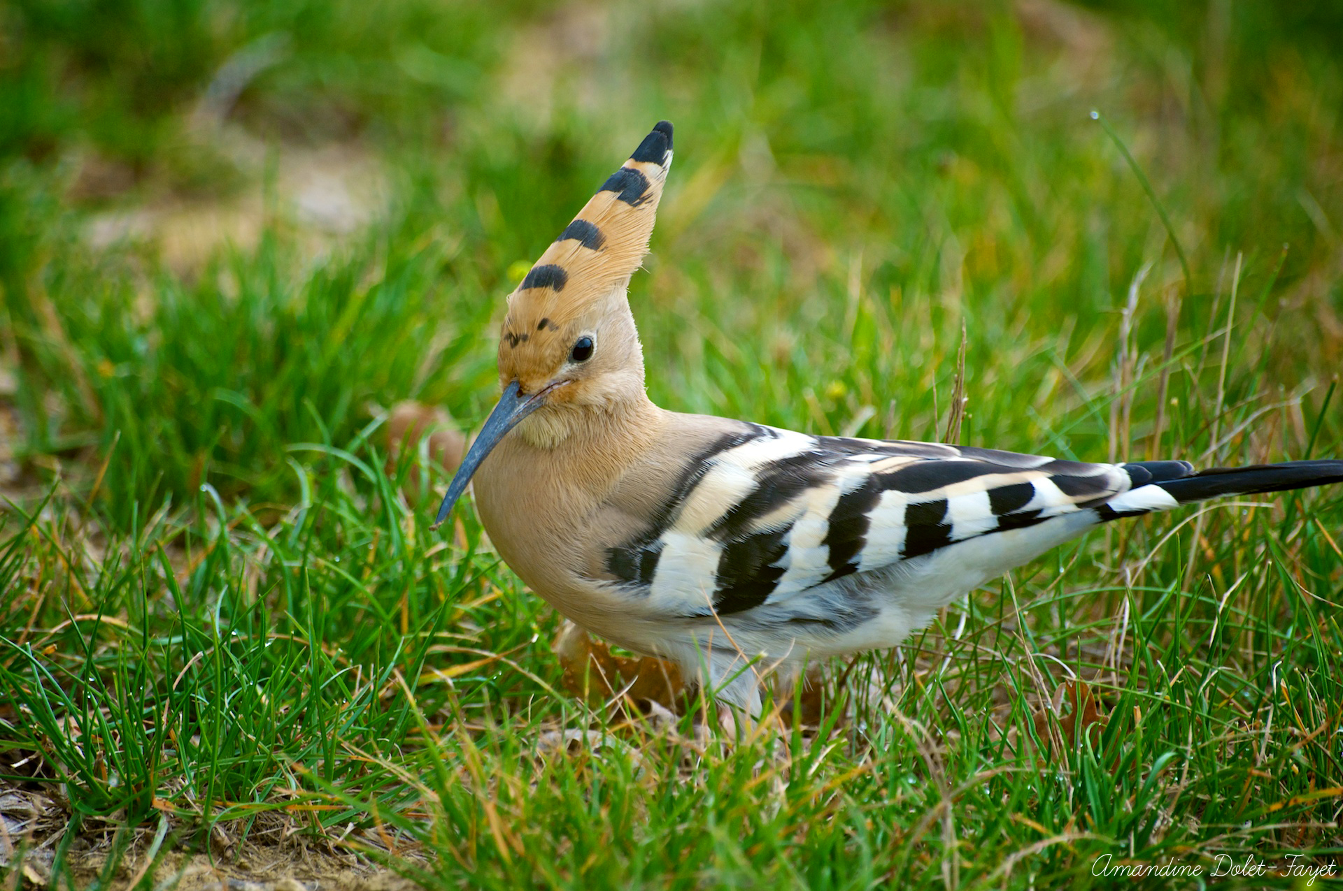 Reflet nature site de photos naturalistes insectes for Oiseau a long bec