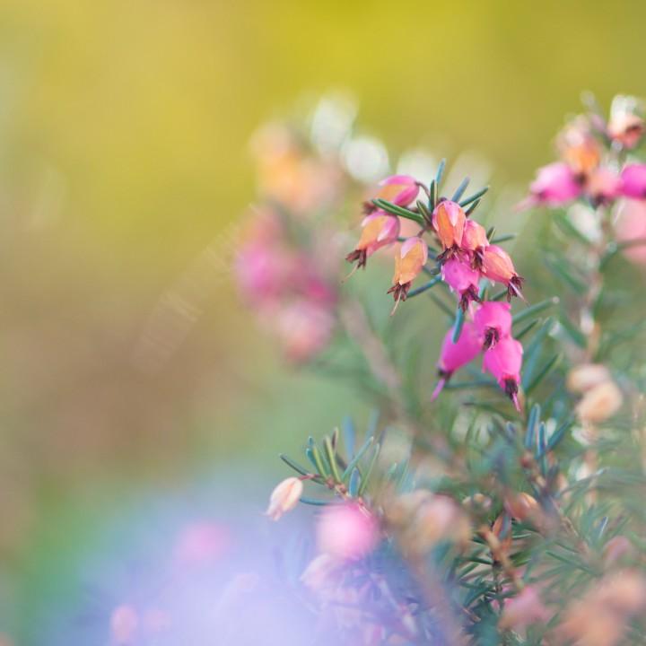 Un printemps coloré