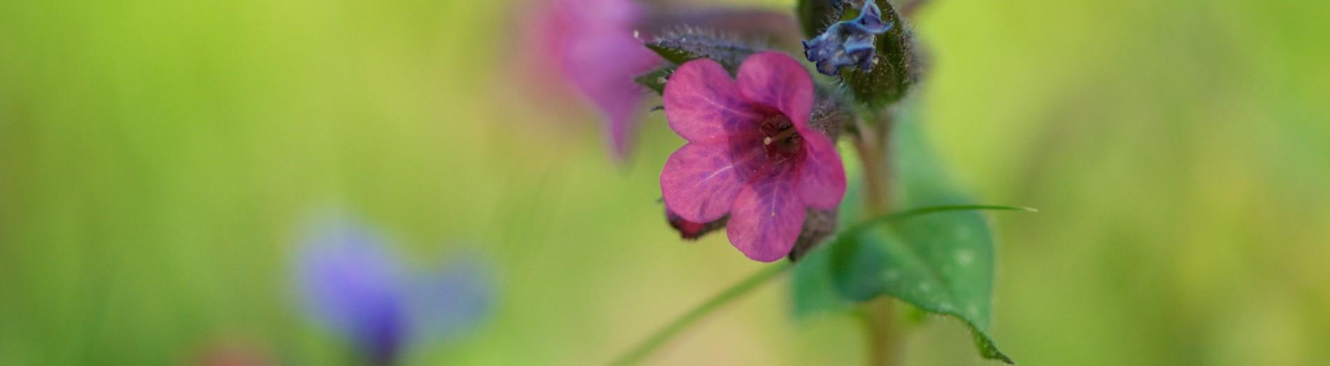 Fleurs des forêts